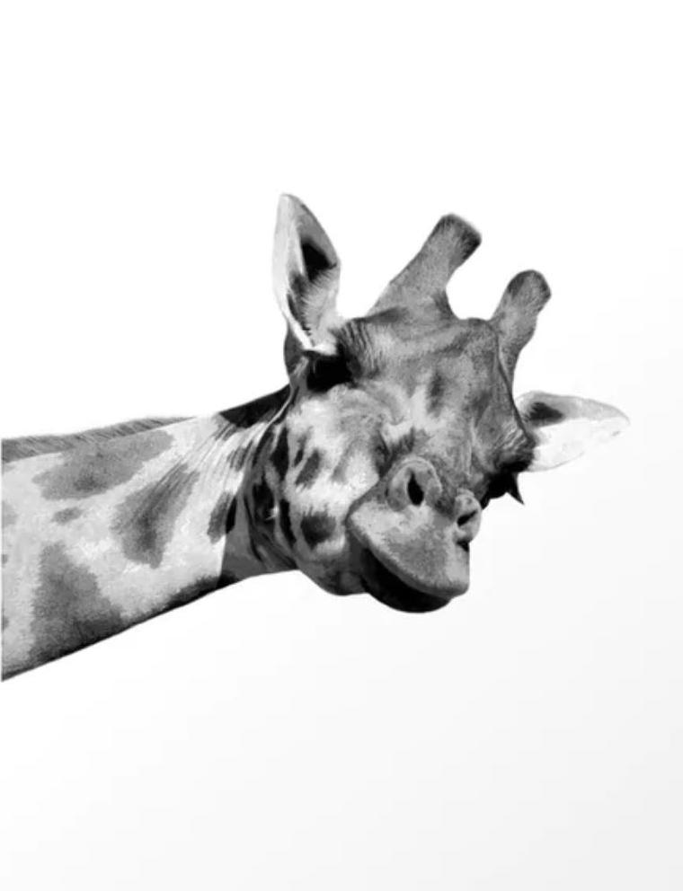 Black And White Giraffe Abstract Art Interior Art